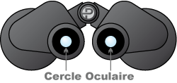 cercle oculaire