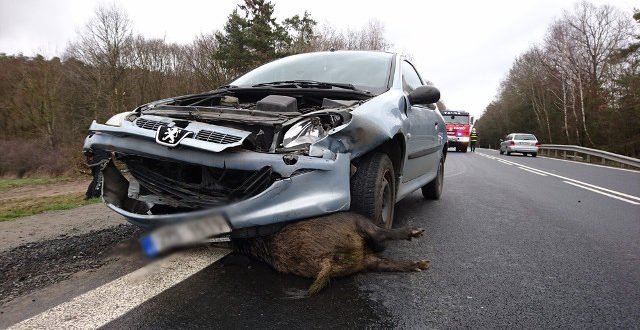 INFO : Collision avec un animal sauvage